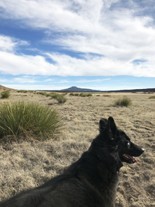 Django, Border Collie hiking in New Mexico