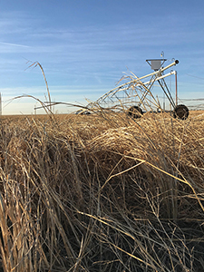 Kansas wheat and center-pivot irrigation