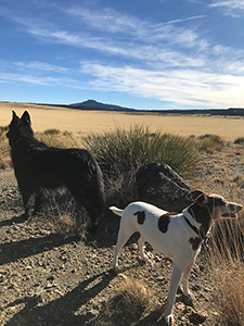 Hiking dogs at Raton, New Mexico - border collie and JRT